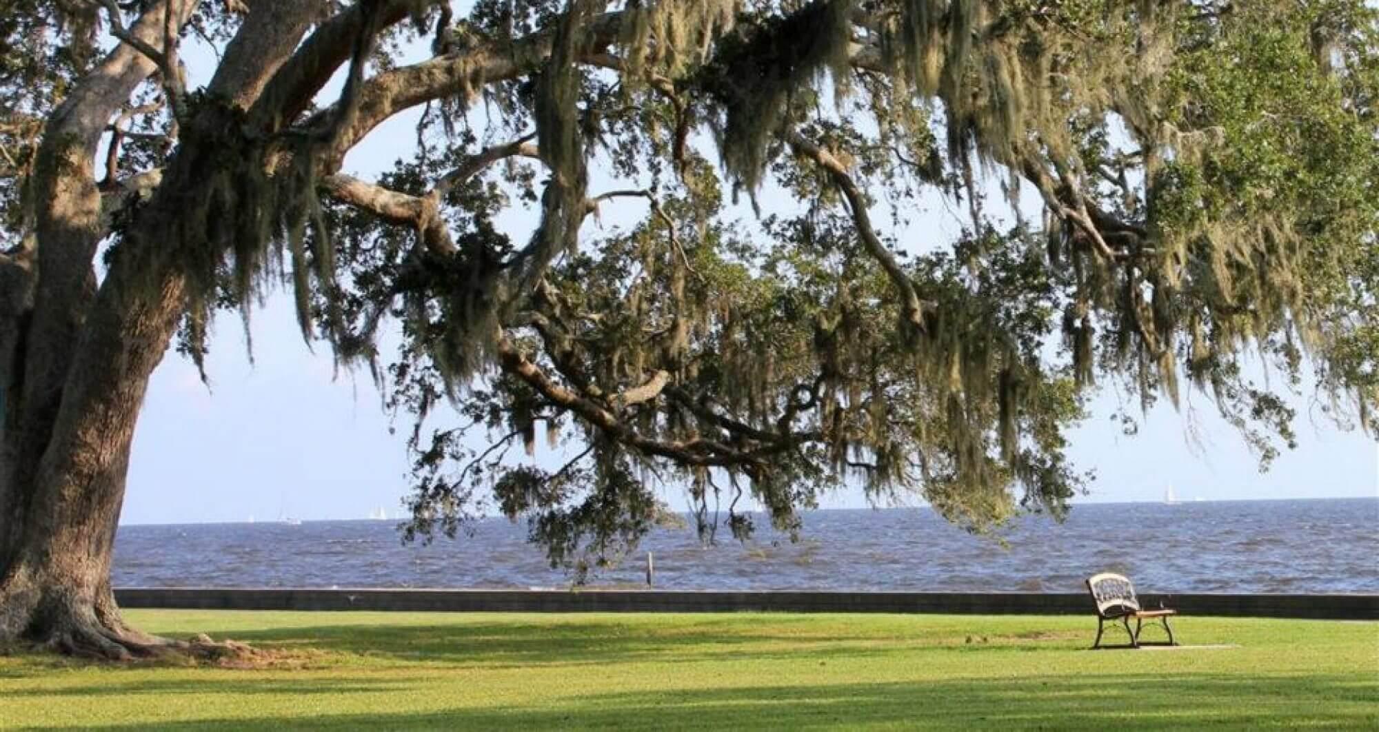 Chimney Sweep Mandeville Louisiana